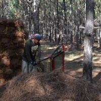 hand-bailing-pine-straw.jpg