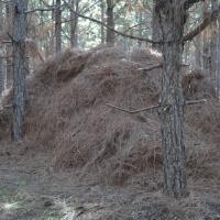 hand-raking-pine-straw.jpg
